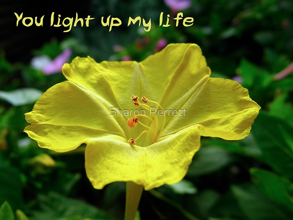 You light up my life by Sharon Perrett
