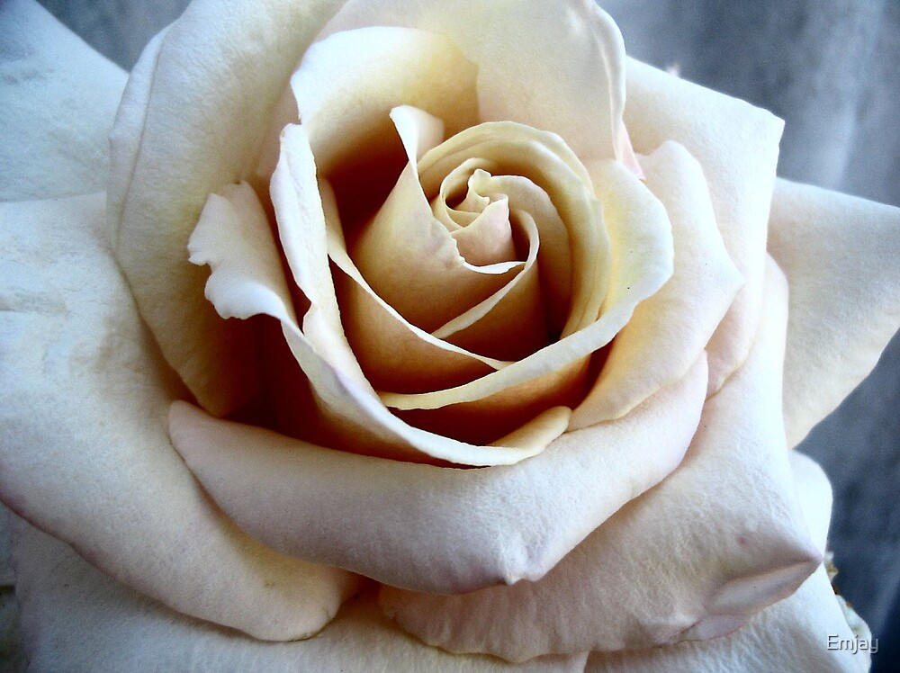 Rustic Rose by Emjay