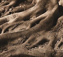 Sepia Veins by Emjay