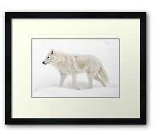 Winter Wolf - Walking Winter Wonderland Framed Print