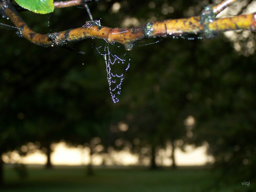 Web B4 Trees by viqi