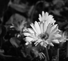 Black and White by Wendy Mogul