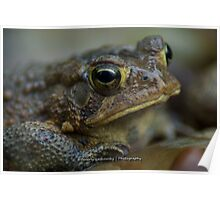 Toad in the Rain Poster