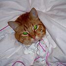 """Green eyes by Belinda """"BillyLee"""" NYE (Printmaker)"""