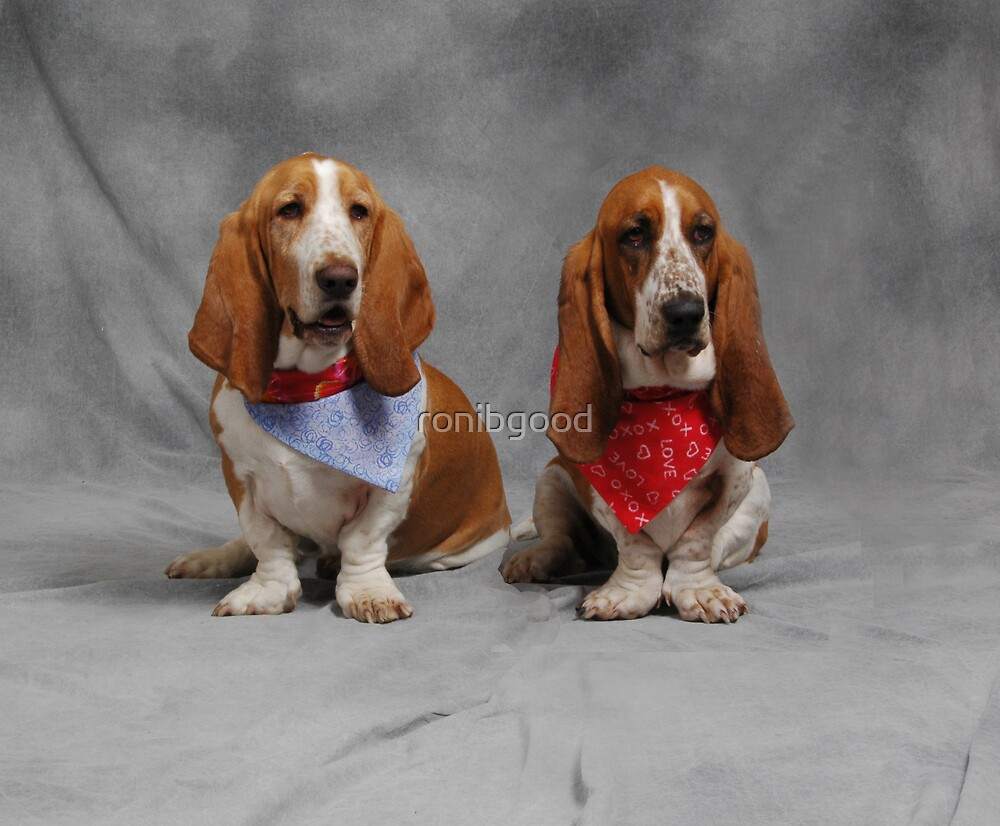 Double Bassets by ronibgood