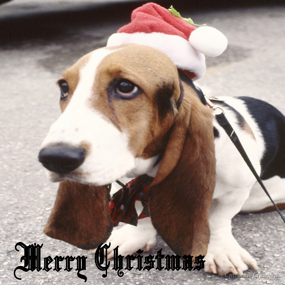 Merry Christmas Pup by Catherine Crimmins