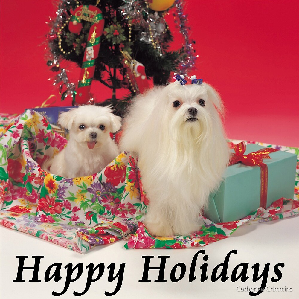 Happy Holidays Duo by Catherine Crimmins