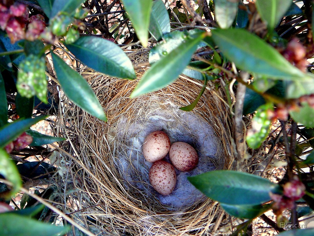 NEST EGGS AMOUNGST THE GREEN by Ekascam