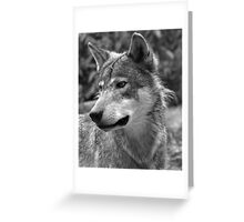 Portrait of Young Wolf Greeting Card