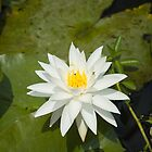 White Lilly by Arthur &quot;Butch&quot; Petty