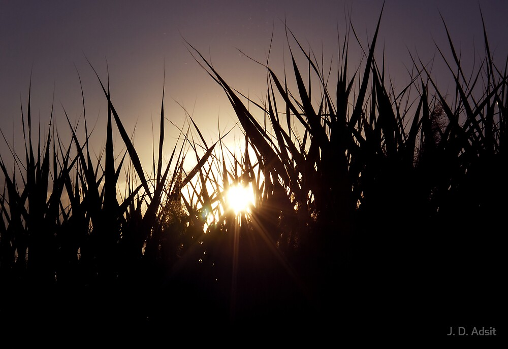 Through Cattails @ Sunset by J. D. Adsit