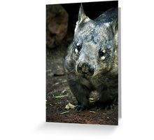 Hairy Nose Wombat Greeting Card