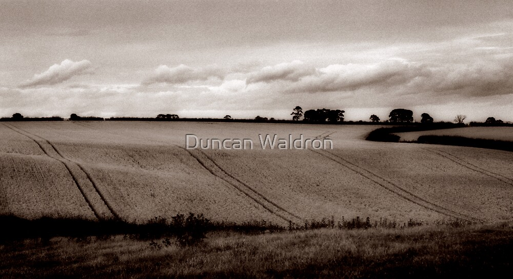 Ripening harvest by Duncan Waldron