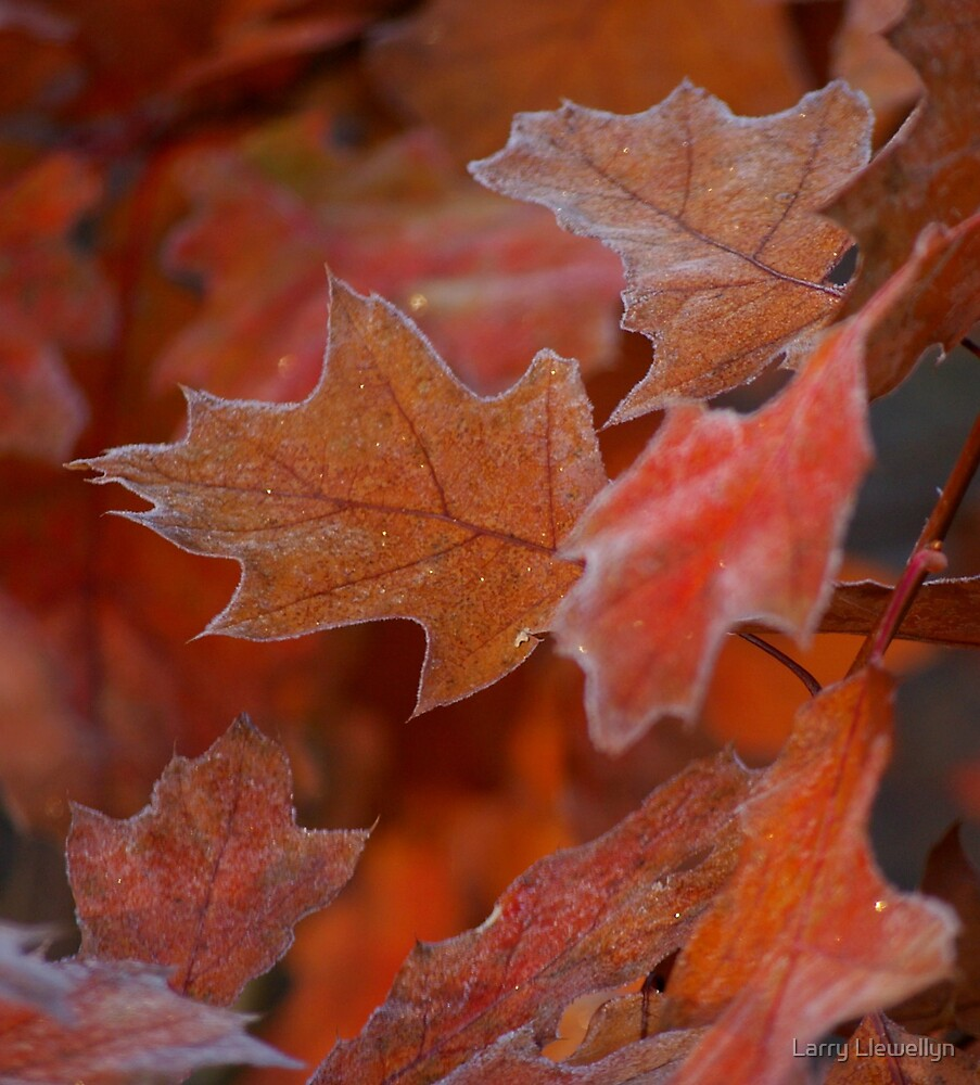 First Fall Frost by Larry Llewellyn