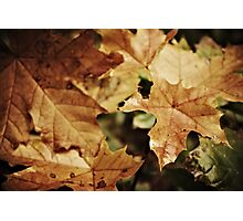 Fellowship of the leaf Photographic Print