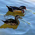 Wood Ducks by Nancy Richard