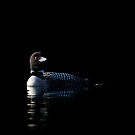 Common Loon on black water by Jim Cumming