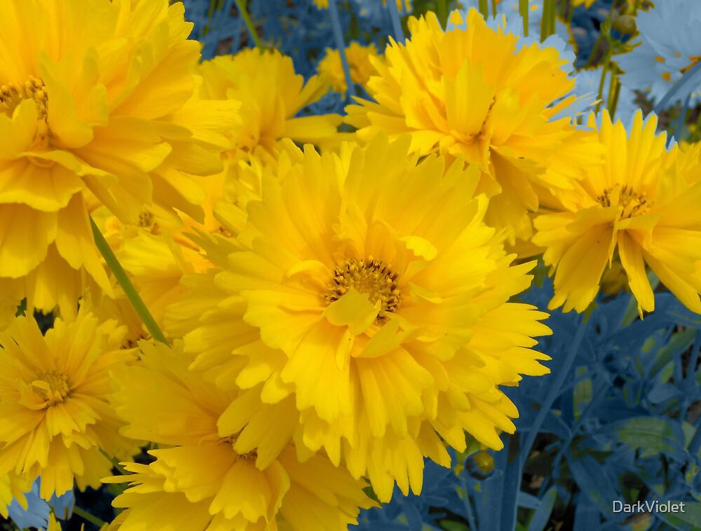 Yellow flowers by DarkViolet