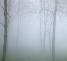misty wood 2 by mrmc714