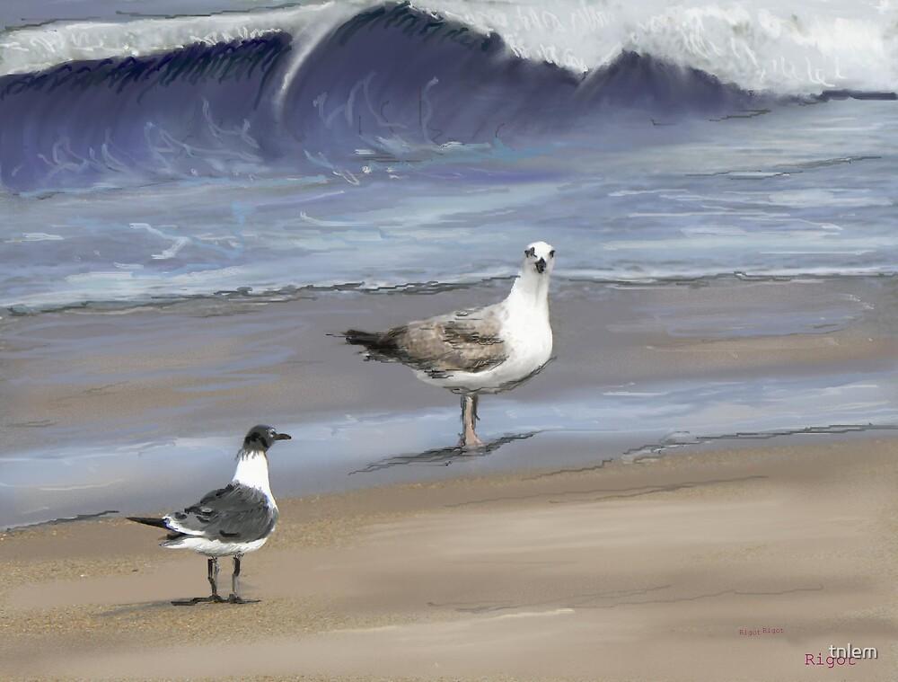 Walk on the beach by tnlem
