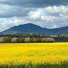 Spring in Alsace by annalisa bianchetti