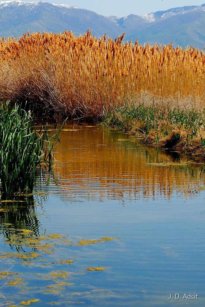 The Wetlands run through Me by J. D. Adsit