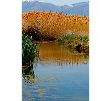 The Wetlands run through Me Photographic Print