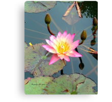 Pink Lilly Canvas Print