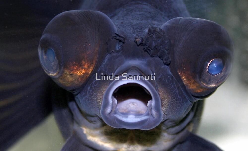 feed me! by Linda Sannuti