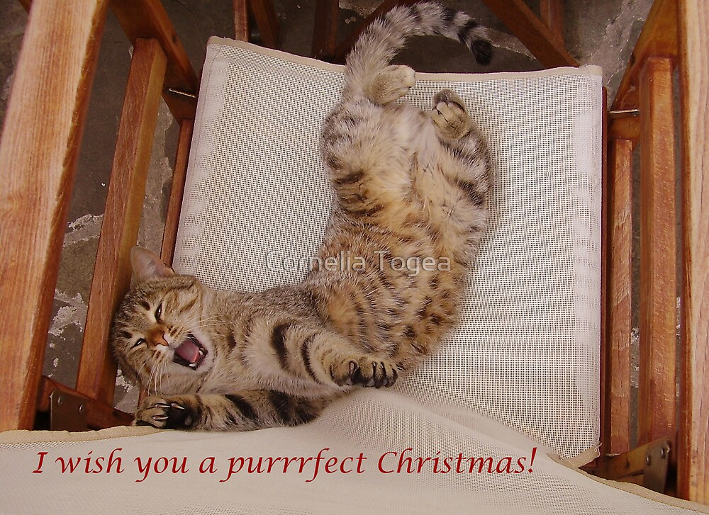 purrrfect Christmas by Cornelia Togea
