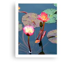 Pond Lillies Canvas Print