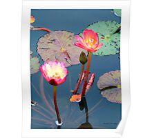 Pond Lillies Poster
