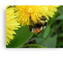 Pollen Gatherer Canvas Print