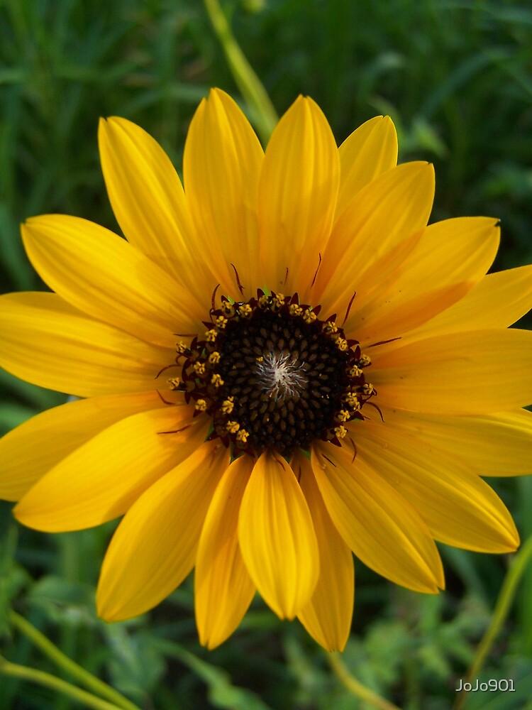 Sunflower by JoJo901