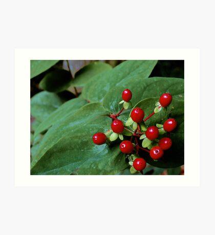 Crimson Berries on Green Leaves Art Print