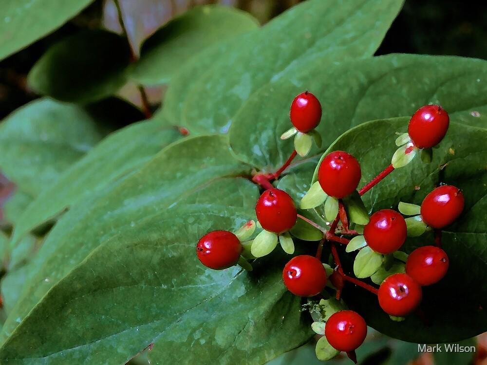 Crimson Berries on Green Leaves by Mark Wilson
