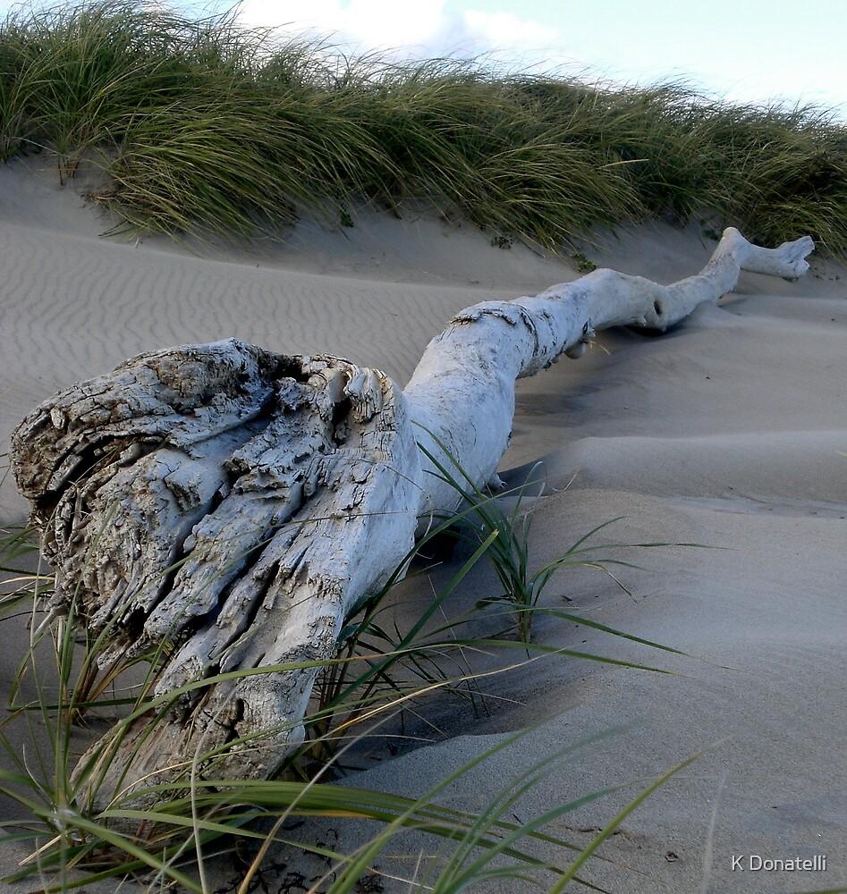 Drift Wood by K Donatelli