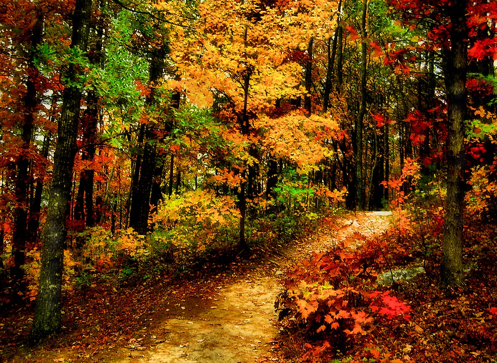 Autumn Path by Marylee Pope