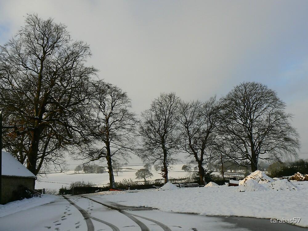 Snowy Broome Park Farm by tarabas57