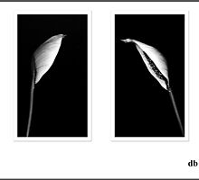 Easter Lily in BW by daniels