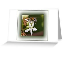 Insect Macro Greeting Card
