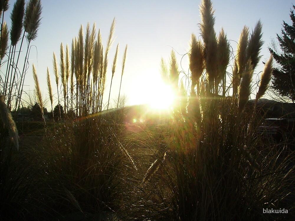 sunset thru the weeds by blakwida