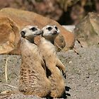Meerkat Duet by Jan Cartwright