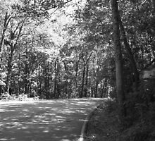Pathway by jpeterka