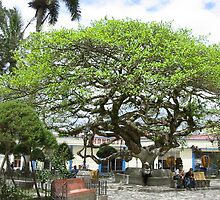 Amate tree by marchk