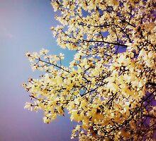 Magnolia  by luckamantra