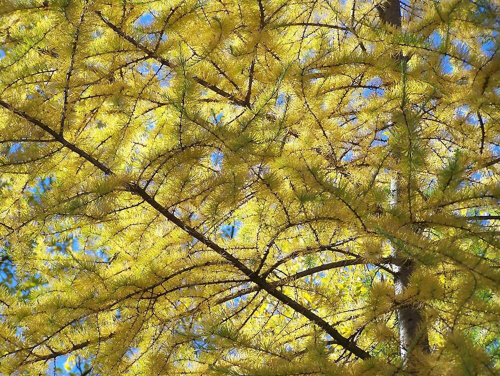 Tamarack Autumn by Gene Cyr