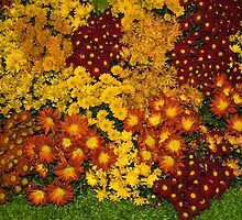 Bunches of Yellow, Copper, Orange, Red, Maroon - Fabulous Autumn Abundance by Georgia Mizuleva