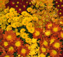 Bunches of Yellow, Copper, Orange, Red, Maroon - Fabulous Autumn Abundance Sticker