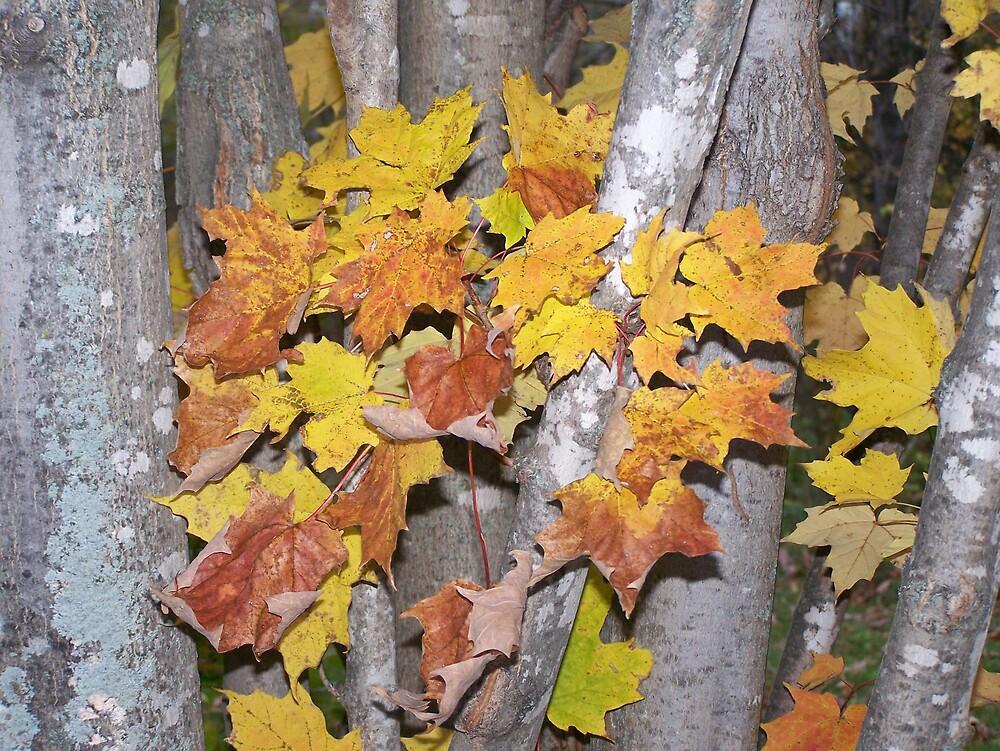 Autumn Tree Trunks by Gene Cyr